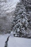 Schnee im Holz Stockbild