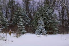Schnee im Land Stockbild