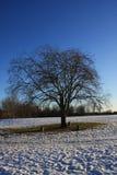 Schnee im Park Stockbild
