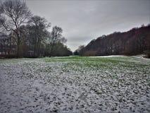 Schnee im Park Stockfotografie