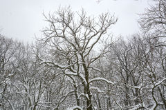 Schnee im Park in Sofia, Bulgarien am 29. Dezember 2014 Lizenzfreie Stockfotografie