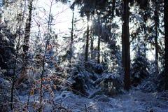 Schnee im tiefen Wald Stockbild