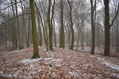 Schnee im Wald stockfoto