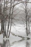 Schnee im Wald Stockfotografie