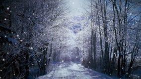 Schnee im Wald stock video