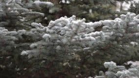 Schnee ist auf dem Hintergrund von grünen Bäumen stock footage