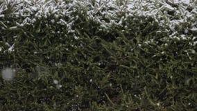 Schnee ist auf dem Hintergrund von grünen Bäumen stock video footage