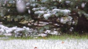 Schnee ist auf dem Hintergrund von grünen Bäumen stock video