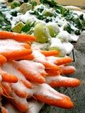 Schnee-Karotten Lizenzfreie Stockbilder