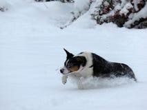 Schnee Leaper Lizenzfreies Stockbild