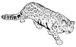 Schnee-Leopard Stockbilder