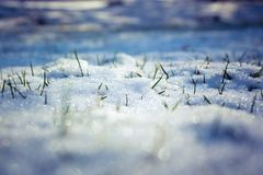 Schnee mit dem Gras, das durch kommt lizenzfreie stockfotos