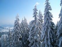 Schnee-mit einer Kappe bedeckt von den Fichten Stockbild