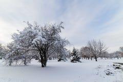 Schnee mit einer Kappe bedeckte Bäume in Iowa Stockfotografie