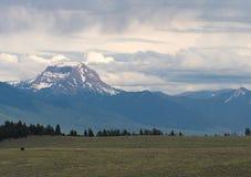 Schnee mit einer Kappe bedeckte Bergspitze mit Grasland stockfotos
