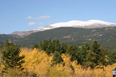 Schnee mit einer Kappe bedeckte Gebirgsgoldespen mit immergrünen Bäumen Stockfotografie