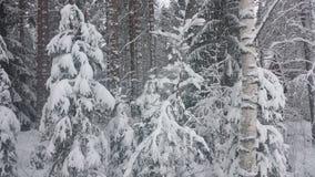 Schnee-Natur Lizenzfreie Stockfotografie