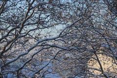 Schnee-Niederlassungen stockfoto