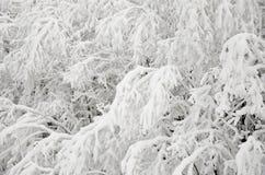 Schnee-Niederlassungen im Winter Stockfotografie