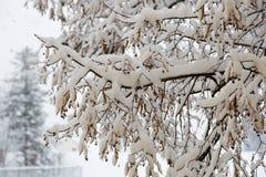 Schnee-Niederlassungen und Winter-Hintergrund Lizenzfreie Stockbilder