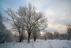 Schnee-Park im wolkigen Wetter Lizenzfreies Stockbild