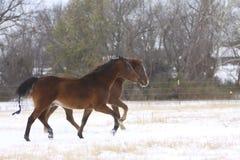 Schnee-Ponys Lizenzfreies Stockfoto