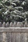 Fallender Schnee auf Immergrün und Zaun. Lizenzfreies Stockfoto