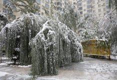 Schnee schädigende Bäume Stockbilder