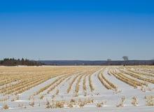 Schnee setzte Forderung im Winter durch Stockfotografie