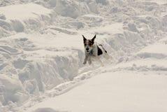 Schnee-Spaß Stockbild