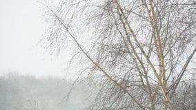 Schnee-Sturm stock video footage