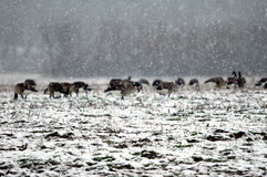 Schnee-Sturm stockfoto