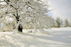 Schnee-Szene Stockbilder