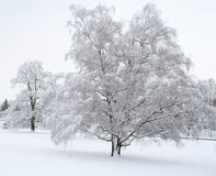 Schnee-Szene Lizenzfreie Stockfotos