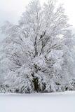 Schnee-Szene Stockbild