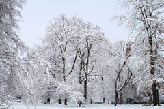 Schnee-Szene Lizenzfreies Stockfoto