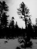 Schnee u. Bäume Stockfoto