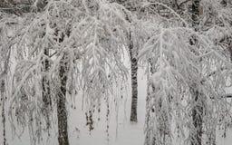 Schnee umfaßte Baumast Stockbilder
