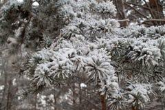 Schnee umfaßte Baumzweige stockfotos