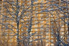 Schnee umfaßte Birkenzweige gegen Haus backgrou stockfoto