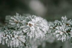 Schnee umfaßte Kieferzweig lizenzfreies stockbild
