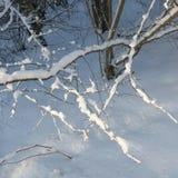 Schnee umfaßte Zweig Stockbild