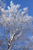Schnee umfaßte Zweig im Winter Stockfotos