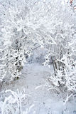 Schnee umfaßte Zweige Lizenzfreies Stockbild