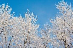 Schnee umfaßte Zweige stockbild