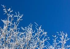 Schnee umfaßte Zweige auf blauem Himmel Stockbild