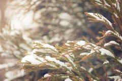 Schnee umfasste immergrüne Niederlassung Lizenzfreies Stockbild