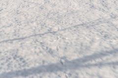 Schnee umfasste Landschaft mit Schatten und Geruch, Bayern, Deutschland lizenzfreies stockfoto