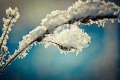 Schnee umfasste Niederlassung gegen defocused Hintergrund stockfoto