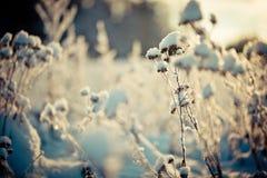Schnee umfasste Niederlassung gegen defocused Hintergrund Stockfotos